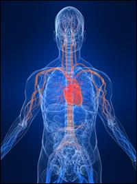Heilpraktiker-Andreas-Gratzl-Viszerale-Osteopathie